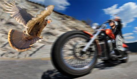 wildturkey_bike.jpg
