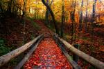 autumn-free-wallpaper-autumn-path_2560x1600_93197.jpg